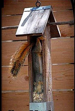 squirrel-feeder